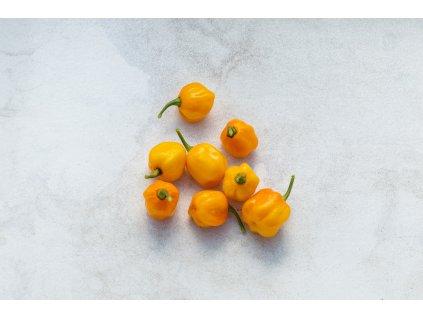 Scotch Bonet Orange