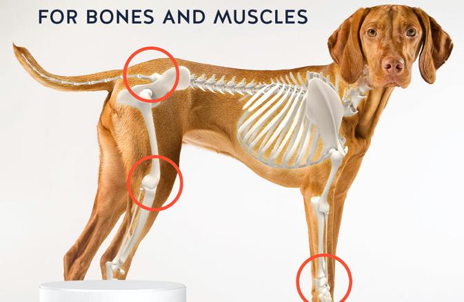 Hydrolyzovaný kolagen pro psy a kočky - proč je důležitý?