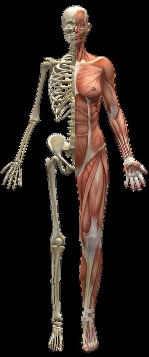 Částí těla