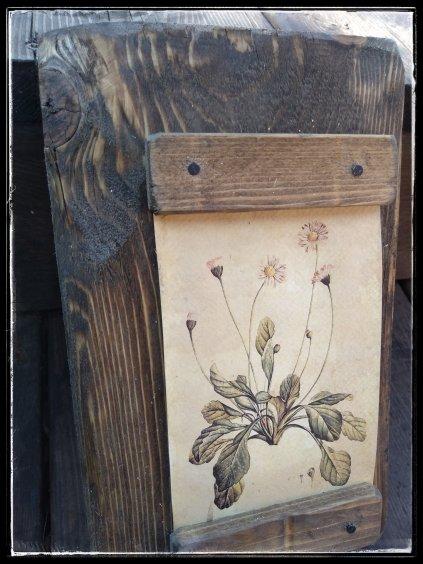 Vidiecky botanický obrázok margarétka