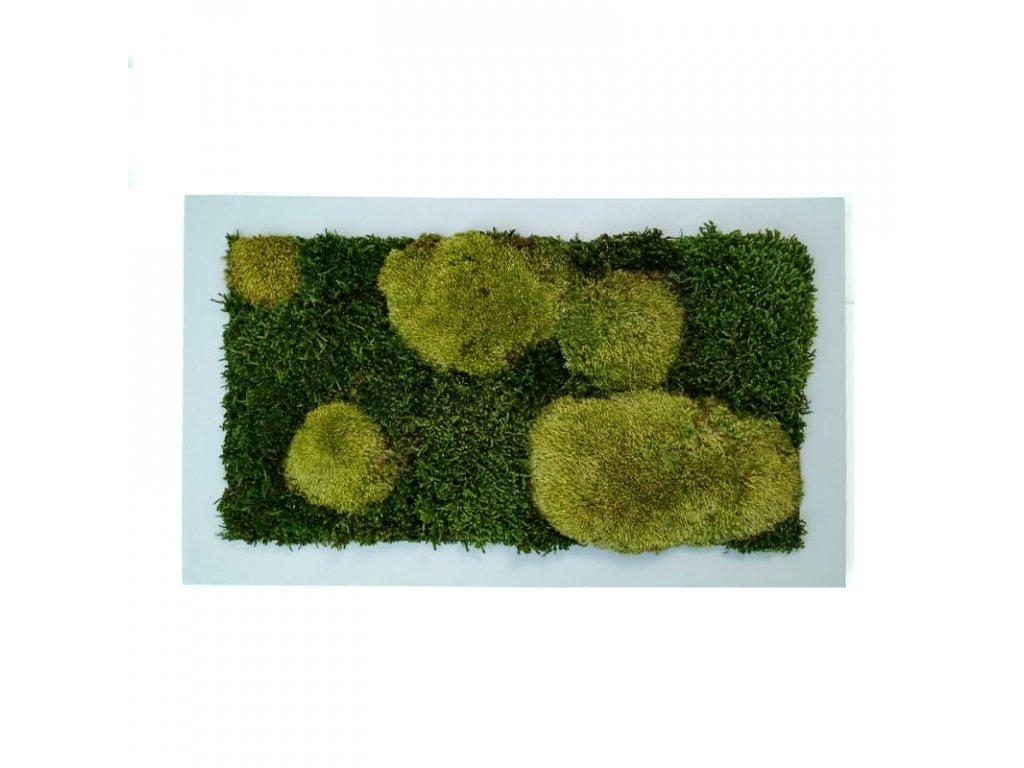 Mechový obraz plochý kopečkový mech (1)