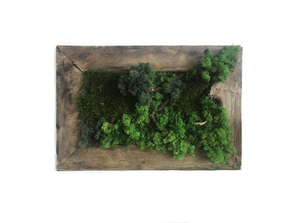 bonsai1