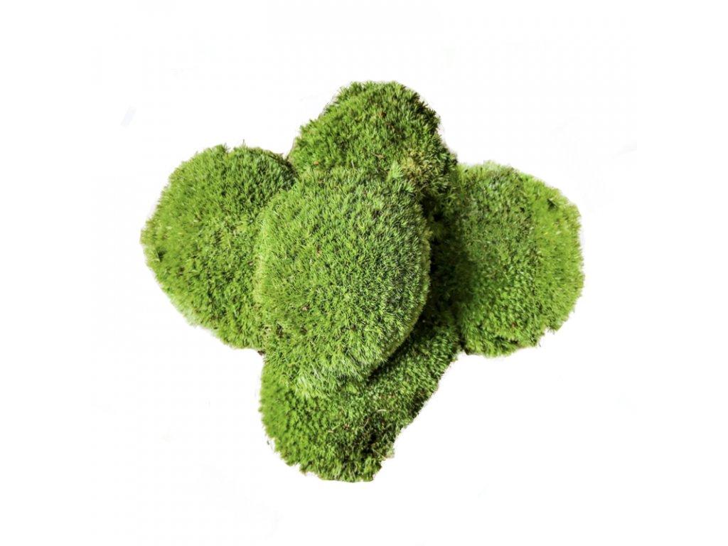 Kopečkový mech - světle zelený