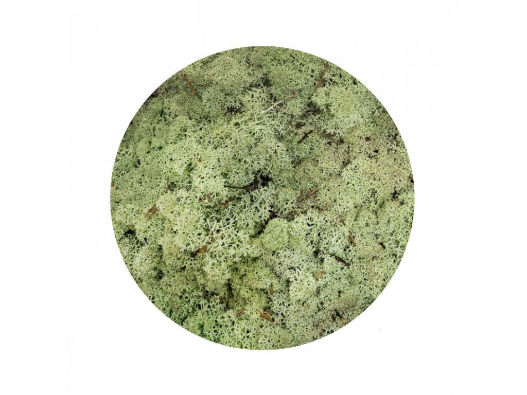 Sobí mech - mátově zelená