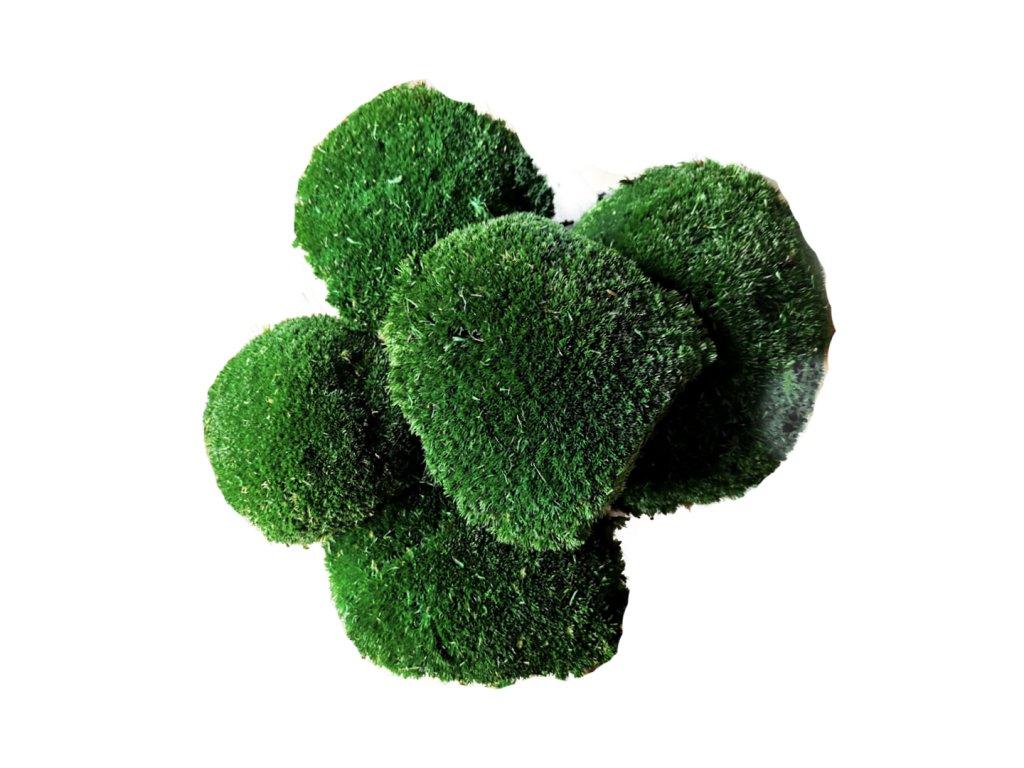 Kopečkový mech - tmavě zelený
