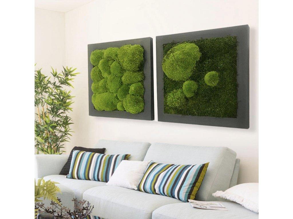 Sada mechových obrazů z kopečkového a plochého mechu v interiéru
