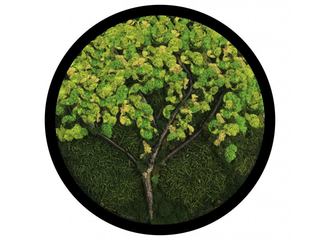 Mechový obraz Strom - sobí mech, plochý mech, kulatý obraz