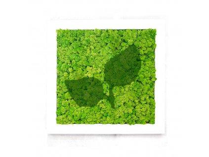 Mechový obraz Rostlina ze sobího mechu- rostlina