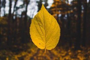 Prozradíme vám 3 trendy barvy letošního podzimu, které zaručeně oživí váš šatník
