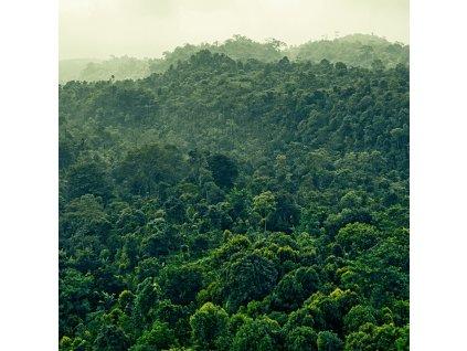 forest alt