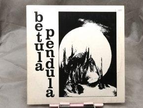 Betula Pendula – Betula Pendula