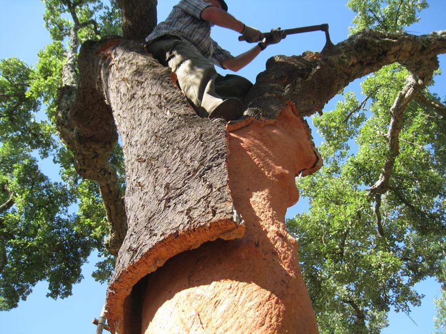 cork-tree_1024x1024