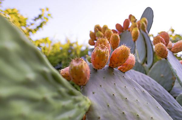 Zázračné rostliny pečující o pleť