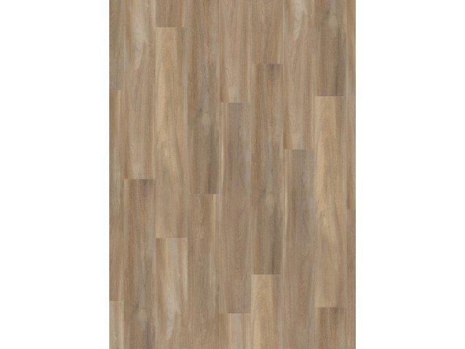 Bostonian oak 0871