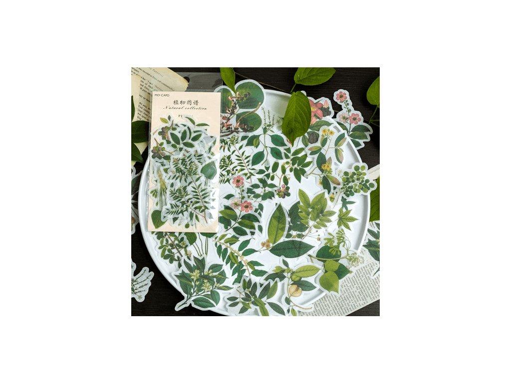 Samolepky ozdobné - Green Leaves, 60 ks