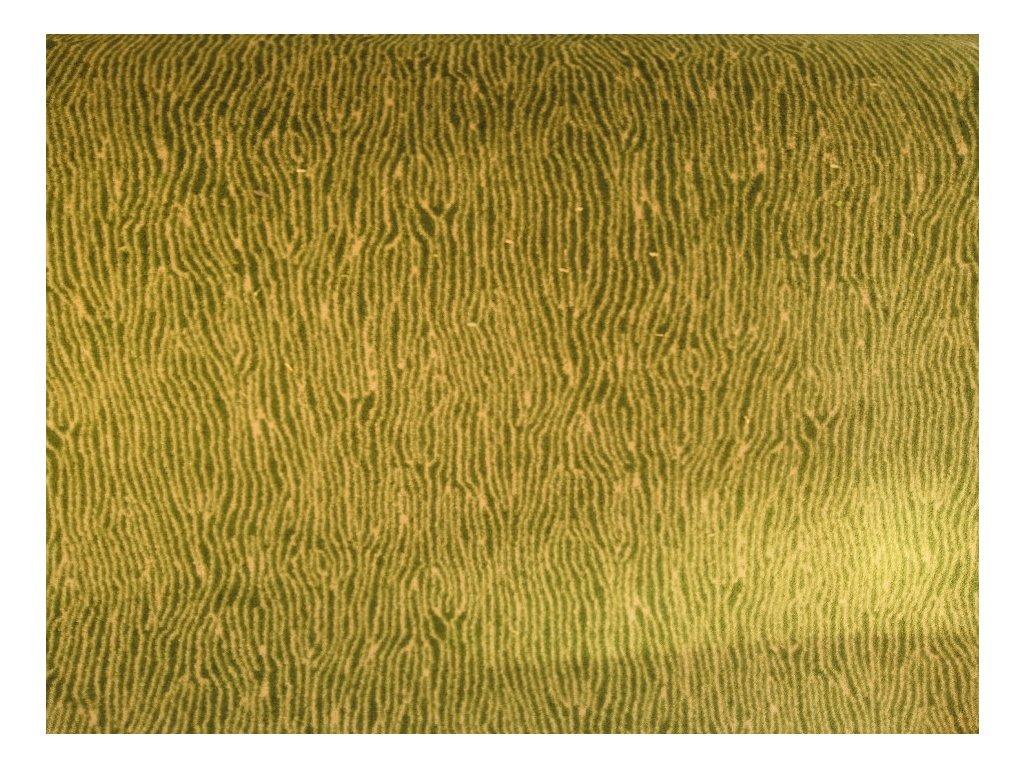 Koberec vlny zelená - 4m