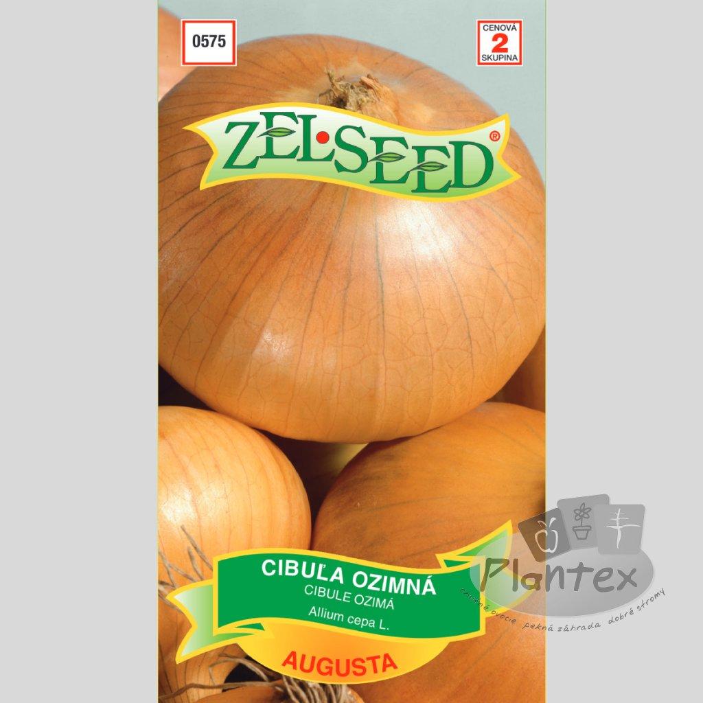 semena cibulaozimna(1)