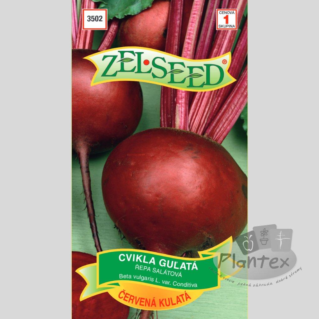 semena cviklagulatacervena(1)