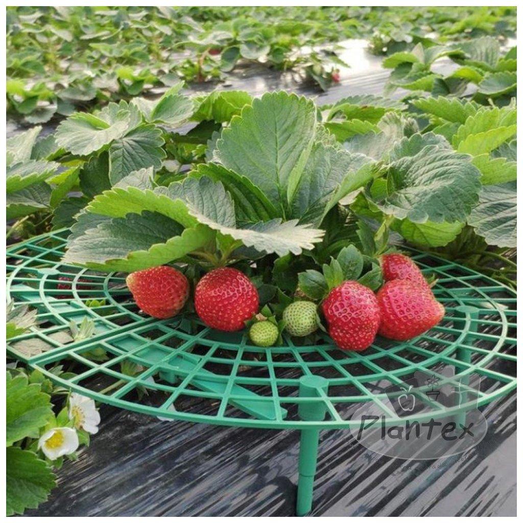 Podporny stojan na jahody