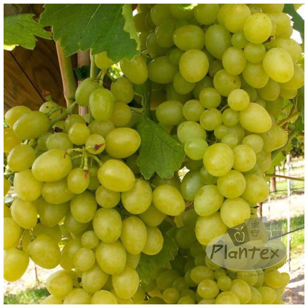 Vinic Arkadia