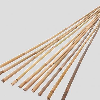 Bambusova tyc
