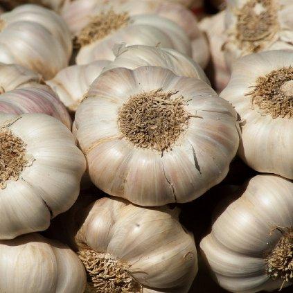 sadbovy cesnak