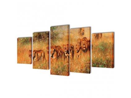 Sada obrazů, tisk na plátně, lev, 100 x 50 cm