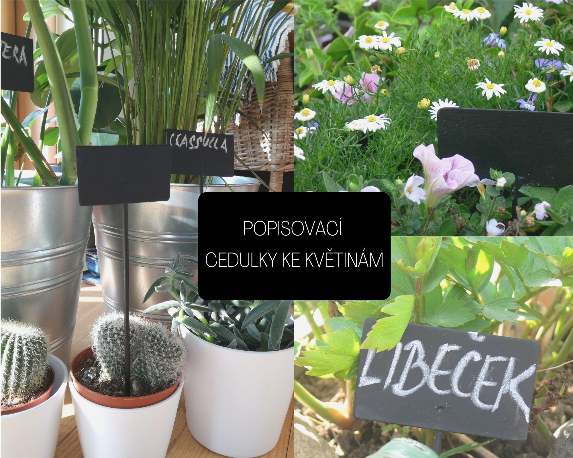 cedulky k výsevům a  k rostlinám