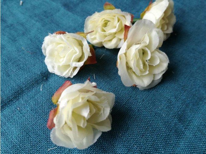 Květ růže smetanová
