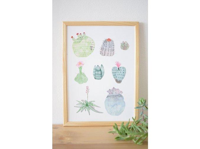 kaktusy8