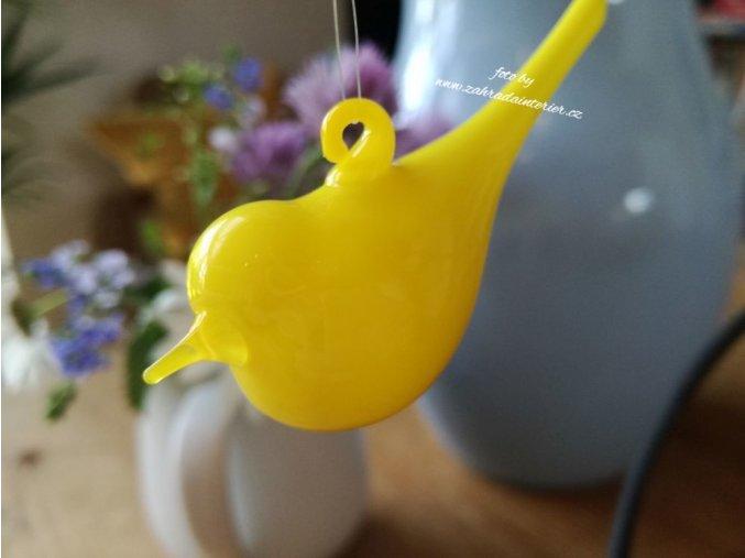 Ptáček žlutý
