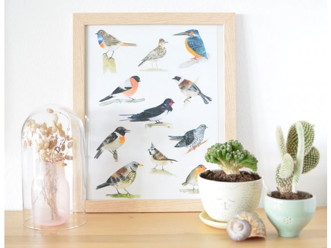 ptaci 1