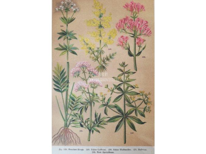 Botanický list XII