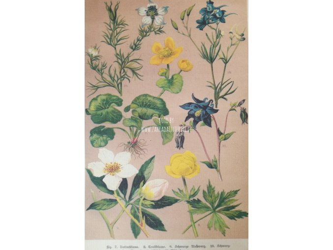 Botanický list XV