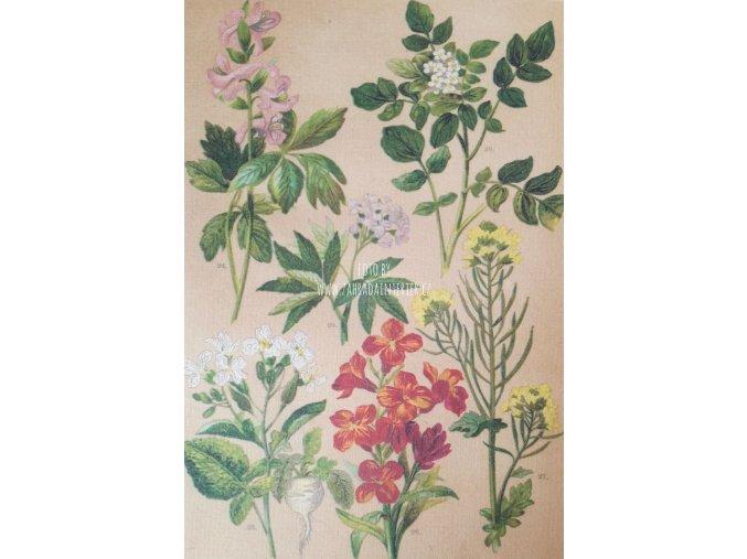 Botanický list XVI