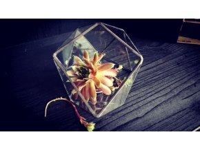 Florárium šikmé
