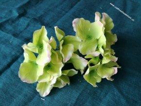 Květy hortenzie žlutozelená