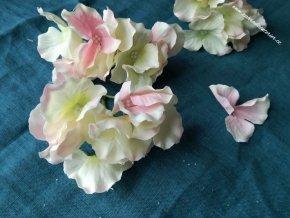 Květy hortenzie růžová