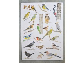 ptaci1
