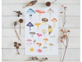 houby print