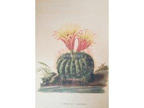 Botanický list kaktus I