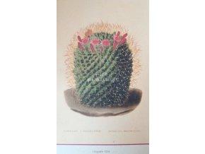Botanický list kaktus II