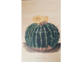 Botanický list kaktus III