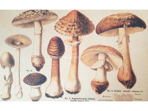 Botanický list houby I