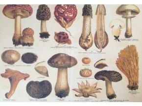 Botanický list houby II
