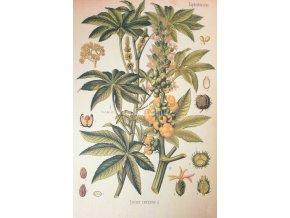 Botanický list ricinus/skočec
