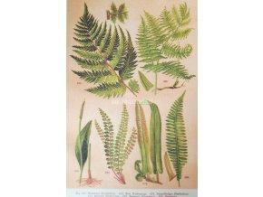 Botanický list kapradí I