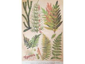 Botanický list kapradí II
