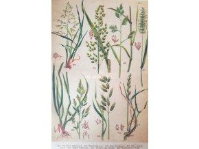 Botanický list trávy