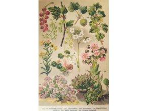 Botanický list I